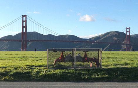 Golden Gate Bridge as a backdrop in San Francisco, CA